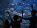 Panika v nákupnom centre: Prasklo obrovské akvárium so žralokmi!
