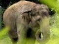 Ohavný čin pytliakov: Kyanidom otrávili desiatky slonov!