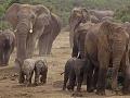 Príliš rýchlo idúci vlak zabil tri slony, prechádzali cez trať
