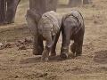 Pytliaci, ktorí v národnom parku otrávili 81 slonov, dostali 16 rokov