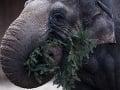 Tragédia v americkej zoo: Slonica zabila chovateľa (†62) prudkým pohybom!