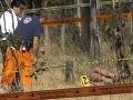 Mexiko terorizujú túlavé psy: Roztrhali mamičku s dieťaťom aj mladý pár!