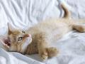 Adoptujzvieratko.sk – prvá celoslovenská databáza zvierat, hľadajúcich domov