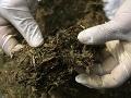 Polícia chytila dílerov drog, skrývali ich aj pod koreňmi stromov