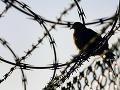 V R. Sobote chcú stavať väznicu s kapacitou do 800 väzňov