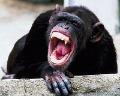 Na dedinu zaútočilo stádo divých opíc, chlapec (16) je v kritickom stave