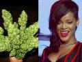 Rihanna sa pochválila valentínskym darčekom: Dostala kyticu konope!