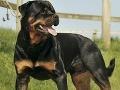 Chovatelia upozorňujú politikov: Zákon o psoch je protiústavný!