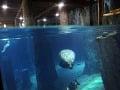Nová atrakcia v Singapure- Riečne Safari. Svoj domov tu má 5000 zvierat z rôznych riek, napríklad z Mississippi, Nílu, či Amazonky.