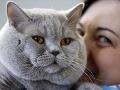 Pozor: Psy, mačky a fretky musia mať oddnes identifikačný mikročip!