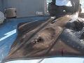 Rybár z mora vylovil 107-kilovú raju: Bolo to ako v Čeľustiach!