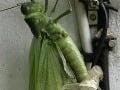 OSN odporúča: Mali by sme jesť viac hmyzu!