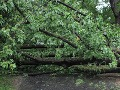 Na Slovensku vyčíňa počasie: Popadané stromy či odtrhnuté strechy!