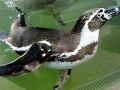 Počas Medzinárodného dňa detí otvorili v košickej ZOO Dino Park a pokrstili najmladšie prírastky tučniakov.