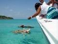 VIDEO, ktoré poteší: Dovolenkový raj na zemi ovládli plávajúce prasatá!