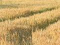 Rakúšanov postihli historické suchá: Boja sa o úrodu