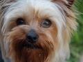 Psy, mačky, ba aj fretky: Neočipovaný miláčik vás vyjde na stovky eur!