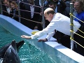 Putin sa opäť predvádzal pred novinármi: Hladkal delfíny a mrože