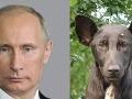 Neprajníci Putina sa bavia: Prezident sa vraj podobá na tohto psa!