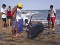 Na pláži v Brazílii uviazlo 30 veľkých delfínov, časť uhynula