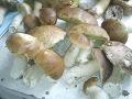 V Česku je tento rok podozrivo veľa vážnych otráv hubami