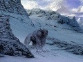 Koniec záhady: Vedci zistili, čo je v skutočnosti yeti z Himalájí