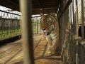 Dramatické momenty v Česku: Z klietky ušli dva tigre a lev, polícia má dobrú správu
