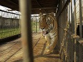 Uväznené zvieratá na hranici.