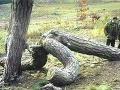 FOTO súložiacich stromov: Takto ste prírodu ešte nevideli!