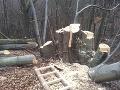 Pytliak z Novej Bane opäť úradoval: Vybúril sa na 50-ročnom strome!