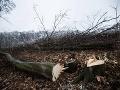 Ochrancovia lesov začali s kampaňou Biomasaker