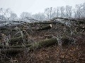 Pohľad na les na bratislavskej Kolibe, kde došlo k nelegálnemu výrubu stromov začiatkom decembra