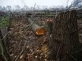 Polícia vyšetruje výrub stoviek stromov: Škodu vyčíslili na takmer 300-tisíc eur