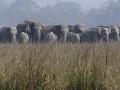 Znetvorené telo Američanky našla polícia, zrejme ju udupali slony