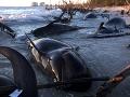Deväť kosatiek uhynulo po uviaznutí na plážach Nového Zélandu