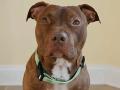 Smetiar zmenil ukrutný osud psíka, ktorý umieral: Stal sa zázrak, FOTO ako dôkaz!