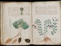 Vedec vraj rozlúštil najzáhadnejšiu knihu sveta: Určená len pre dámy