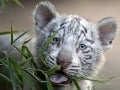 Ľudstvo zlikvidovalo polovicu populácie divokých zvierat: Stačilo nám na to 40 rokov!