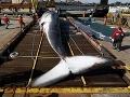Spojené štáty žiadajú o pomoc občanov: Nemajú kam dávať desiatky mŕtvych veľrýb