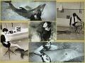 VIDEO Delfín sa pri experimente zamiloval do svojej učiteľky: Mali spolu sex!