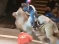 Diváčka sa strápnila pred celým cirkusom: VIDEO epickej jazdy na ťave