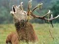 Poľovník mal v hľadáčiku jeleňa: Zvrat ako z hororu, v nemocnici nakoniec zomrel on