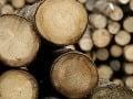Zlodeji vyrúbali 20 stromov, hrozia im za to až tri roky