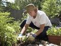 August vo vašej záhrade: Čo sa vyplatí vysiať práve teraz?