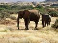 Smutné: Pytliaci zabili v rokoch 2010-2012 v Afrike 100-tisíc slonov