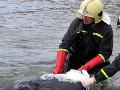 Češka sa pri potápaní už nevynorila: Jej bezduché telo našli po hodinách pátrania