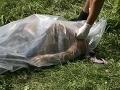 Vražda na univerzite v Brne: Telo študentky(†24) našli uprostred botanickej záhrady