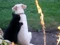 Mäkučký rituál psa a mačky na VIDEU vás dostane: Kto by nechcel takúto masáž!