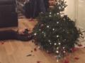 Komické VIDEÁ plné vianočných
