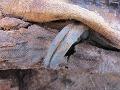 Unikátny nález archeológov: V Egypte odhalili pohrebisko s miliónom pozostatkov tiel!